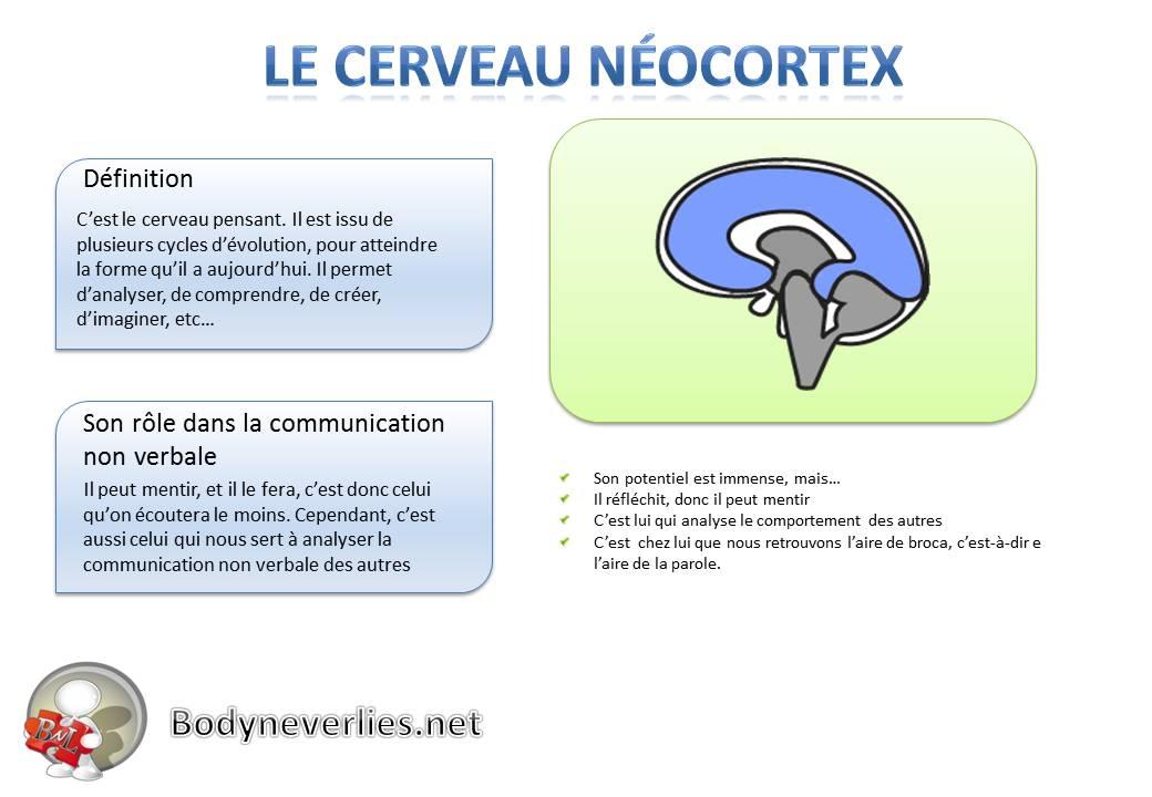 Le cerveau néocortex
